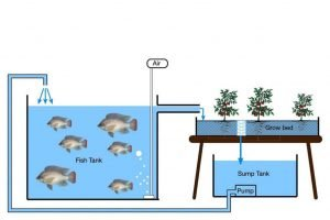 what is aquaponics schematic drawing