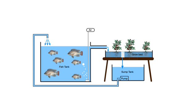 what is aquaponics - featured image