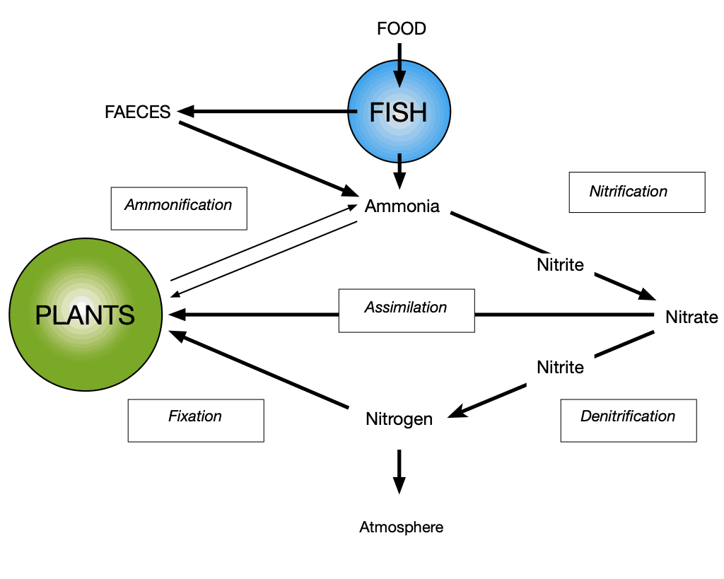 nitrogen cycle, Nitrogen Cycle – essential features for aquaponic systems.