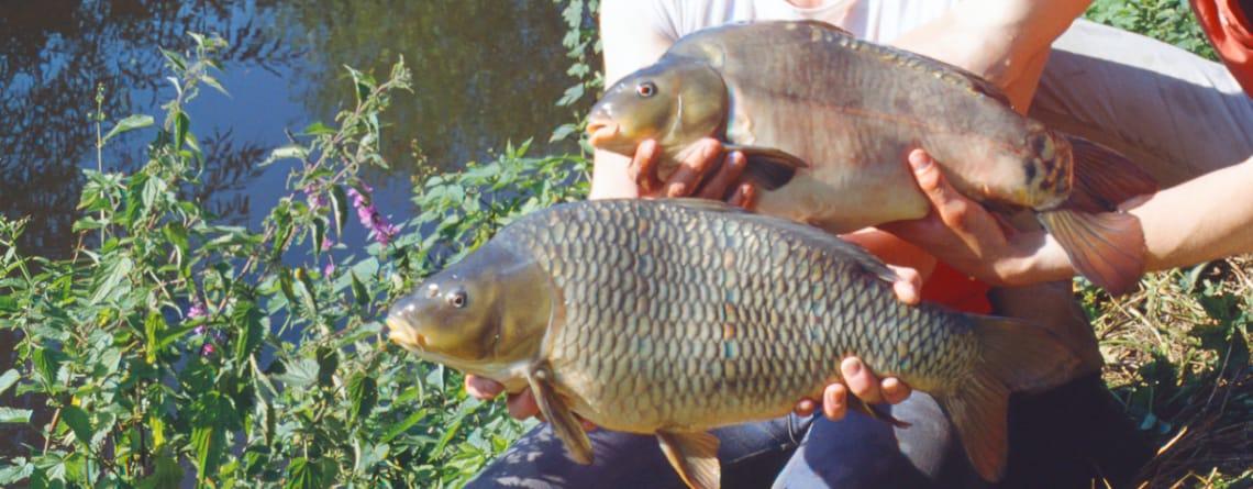 feeding pond fish, Feeding Pond Fish