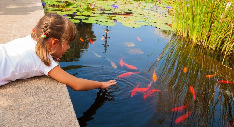 small girl feeding goldfish in a pond