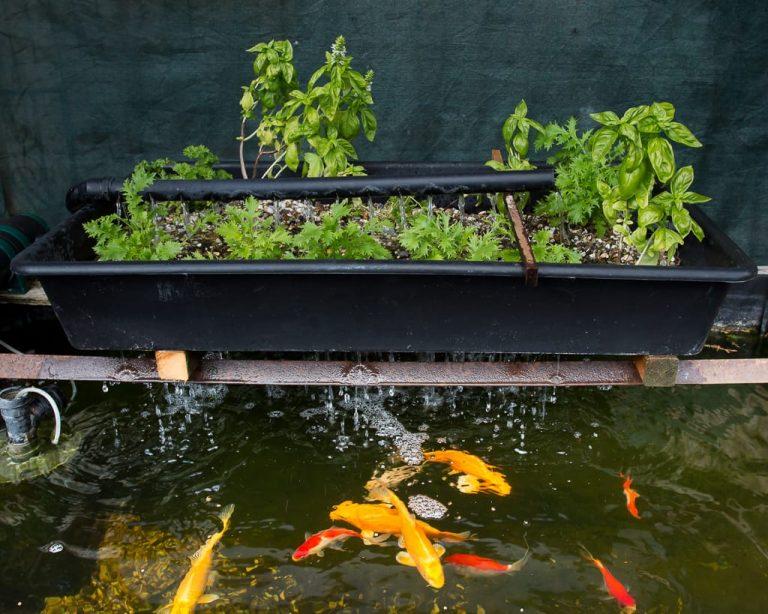 basic aquaponic gardening setup