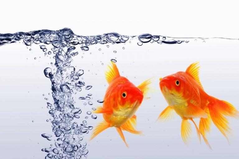 do fish need oxygen