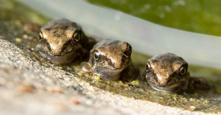 Cute little garden froglets